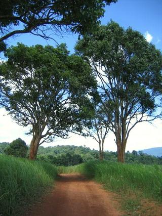 ต้นไม้แห่งปฐมฌาน