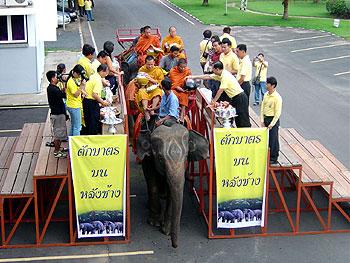 ตักบาตรบนหลังช้าง