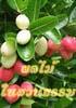 ผลไม้ในสวนธรรม